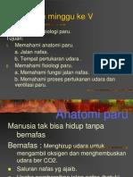 anatomi fisiologi paru