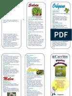 triptico plantas antiinflamatorias