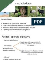 Ratites and Carenadas