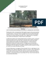 Las Amenazas Al Bosque