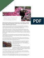 China, Maior Poluidora Do Mundo, Lidera Ranking de Sustentabilidade Da ONU _ Meio Ambiente _ DW.de _ 18.06