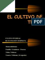 Trigo Ecofisiologia