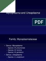 53Mycoplasma09
