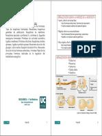 Señalización endocrina