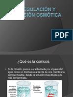 Regulación y presión osmótica(1).pptx