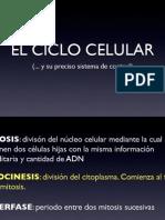 Ciclo Celular Copia