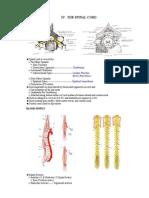 OS Spinal Cord