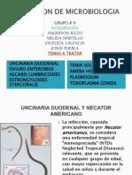 Uncinaria Duodenal y Necator Americano