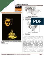 Anatomia Da Face (Humbert Grun ATM)