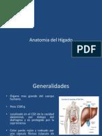 Anatomia del Hígado