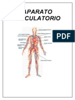 Sistema Circulatorio (Recuperado)