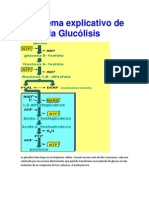 Esquema explicativo de la Glucólisis