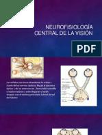 Neurofisiología central de la visión