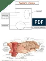 Anatomi Uterus