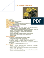Crizantema Si Tufanica