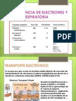 Transferencia de Electrones y Cadena Respiratoria