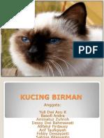 Kucing Birman Ppt