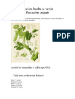 Fasolea Boabe Si Verde