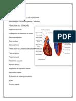Presion Arterial Fisio