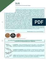N16 Phyto Oestrogenes