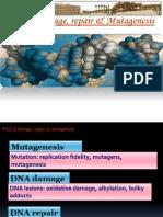 10- Mutagens and Mutagenesis