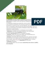 Exercícios e Características dos Artrópodes