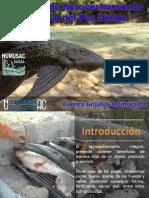 Proyecto de Aprovechamiento Integral Del Pez Diablo Cuenca Grijalva Usumacinta PDF Litletitito