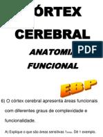 017 - Cortex Cerebral 2