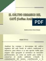 Cultivo Organico Del Cafe