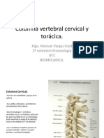 Columna Cervical y Toracica
