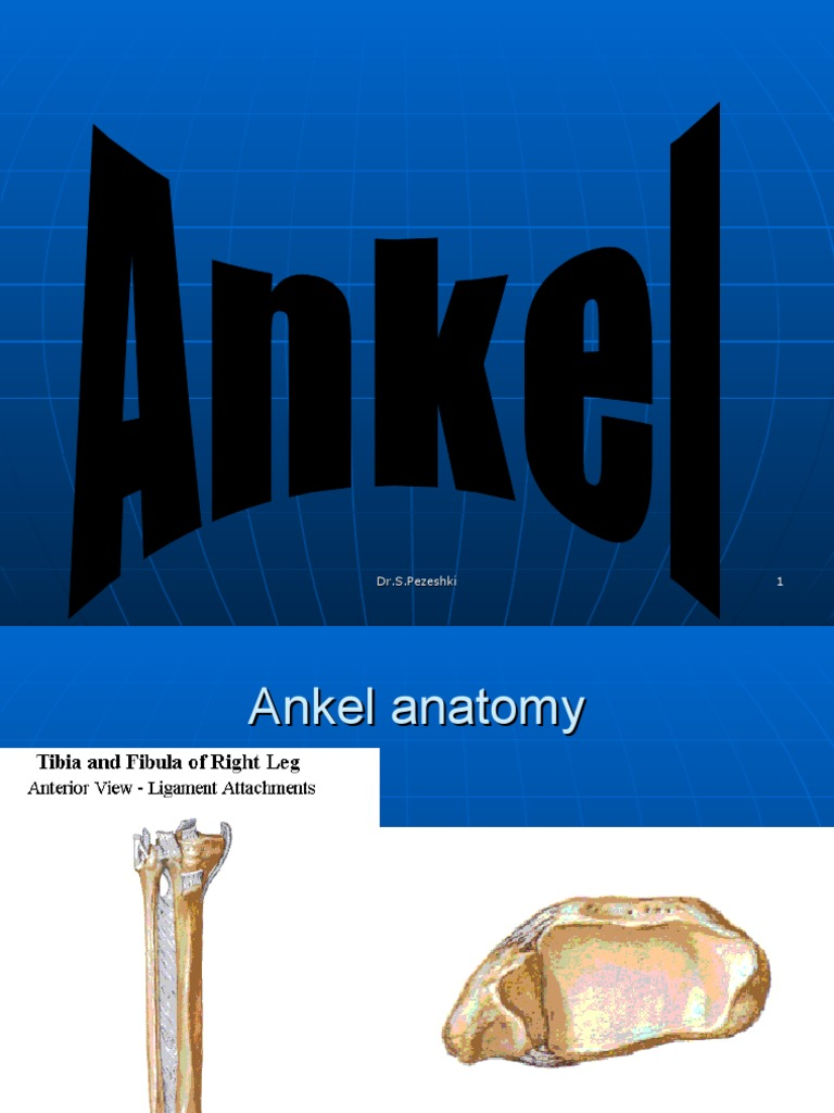ANKEL   Ankle   Musculoskeletal System