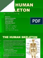 THE HUMAN SKELETON.ppt