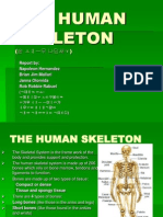 THE HUMAN SKELETON.ppt