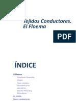 Tema 4b Conductores Floema