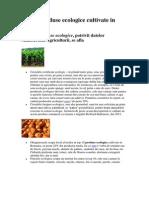 Top 10 Produse Ecologice Cultivate in Romania