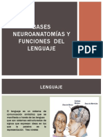 Bases  neuroanatomías y funciones  del  lenguaje