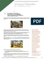Sociedades de Cazadores Recolectores Del Paleolitico_ Aprovechamiento de Los RR.nn