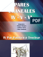 parescraneales 4-5 y6