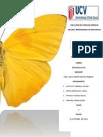 Informe de Epidemiologia Expo