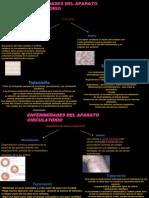 Enfermedades+Del+Aparato+Circulatorio+Presentacion
