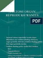 Anatomi Fisiologi Organ Reproduksi Wanita