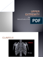 Upper Limb.ppt