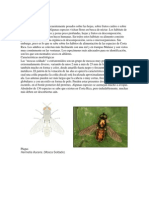 Familia Stratiomyidae