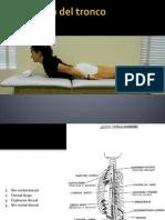 funciones musculares