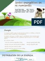 Requerimientos energéticos en Pre rumiantes.pptx