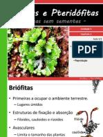 aula briofita e pteridófita