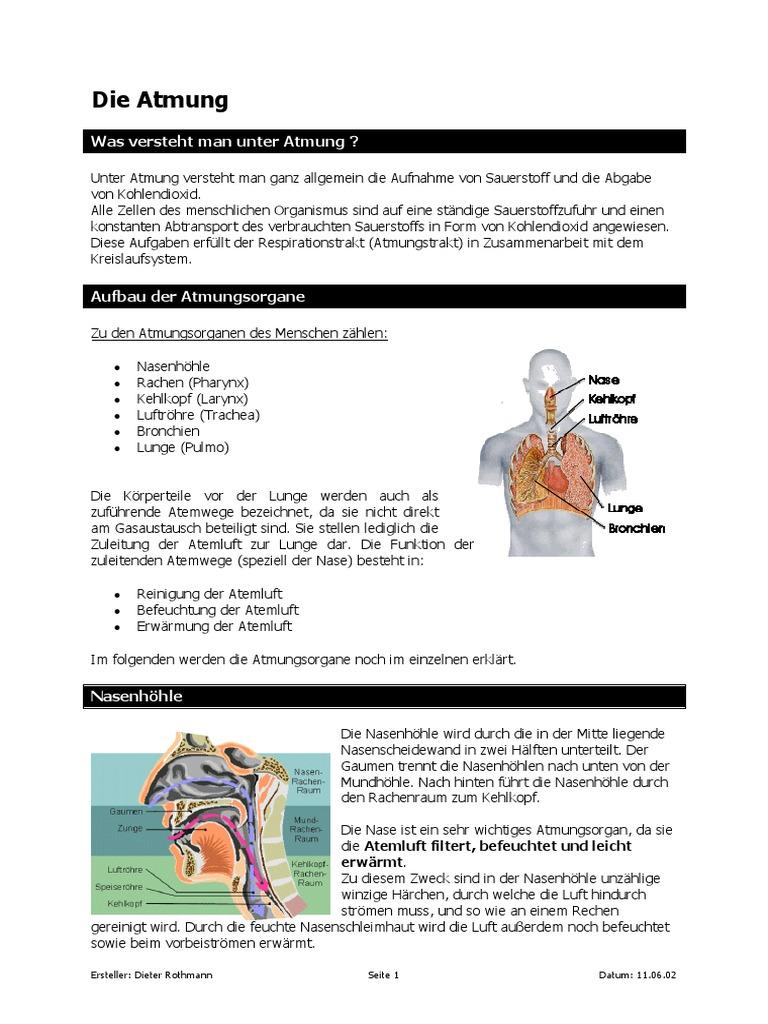 Groß Bronchien Funktion In Atmungssystem Bilder - Menschliche ...