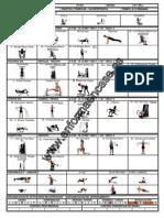 Grupos Musculares Mas Un Dia de Circuito I