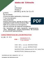 Clase Hemato 4 - Eritrocitos