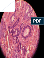 7 - Histologia Veterinária - Artérias.pdf